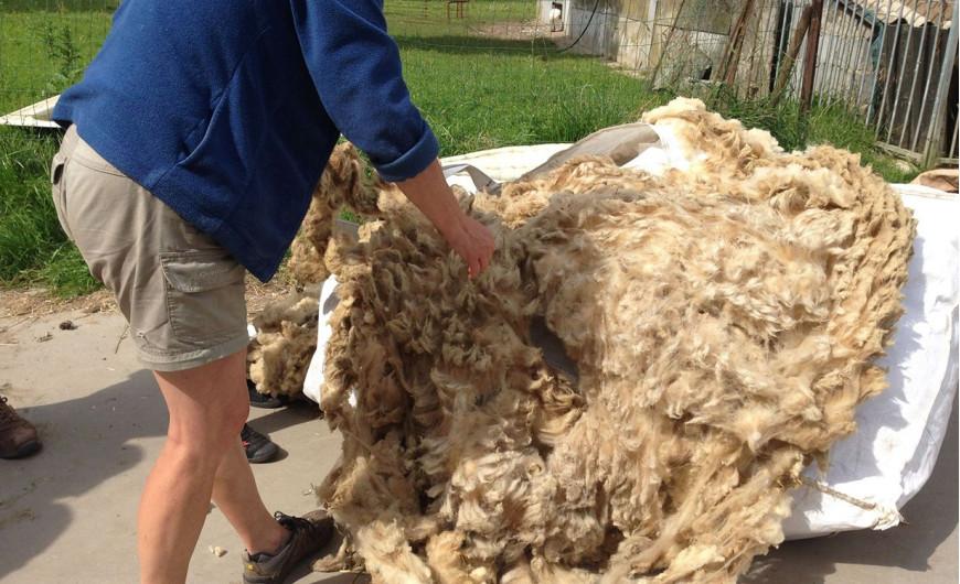 RTBF Info : La laine wallonne: un secteur qui prend de l'ampleur